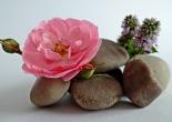 Stone Flower - A Short Story