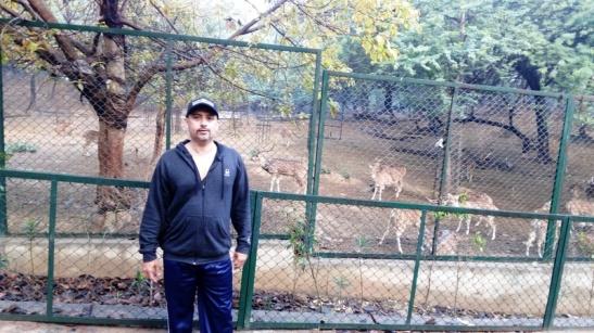 deer park4