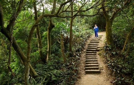 blog-Taiwan-forest-hike-trail-jungle
